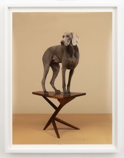 William Wegman, '7 Legs', 2015