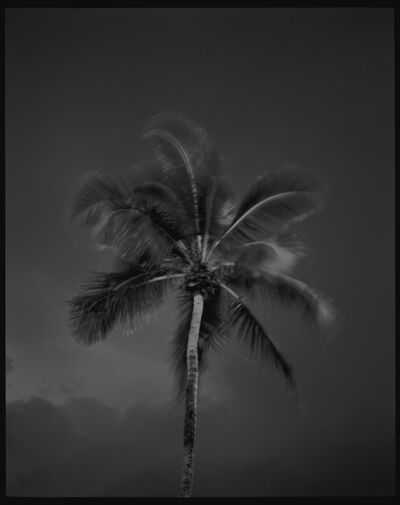 The Douglas Brothers, 'Palm (Miami)', 1993