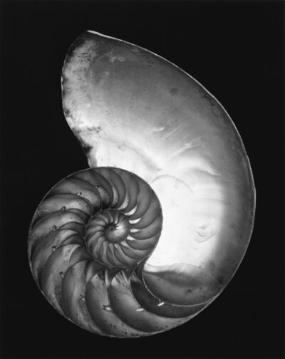 Edward Weston, 'Shell (nautilus).', 1970s
