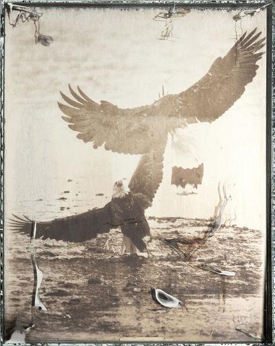 Matthew Brandt, 'Eagles 54B', 2017-2019