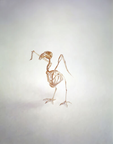 Tim Hawkinson, 'Bird', 1997