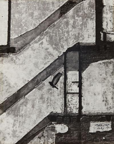 André Kertész, 'Landing Pigeon, March 2, New York', 1960