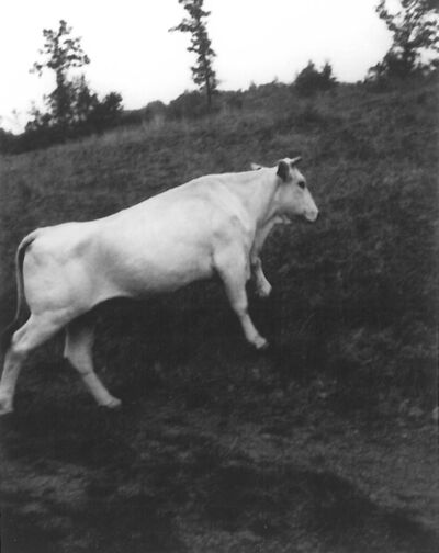 Patti Smith, 'White bull, Spain', 2010