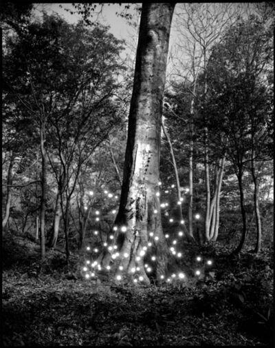 Tokihiro Sato, 'Shirakami #3', 2008