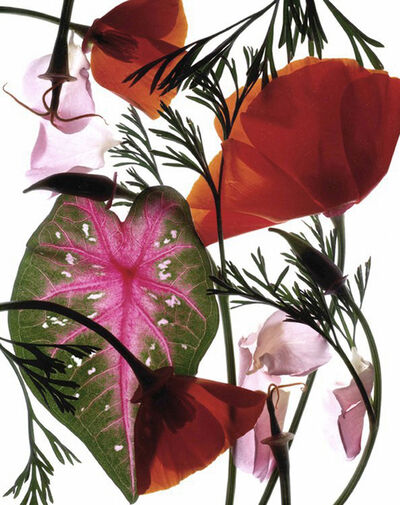 Carol Henry, 'California Garden'
