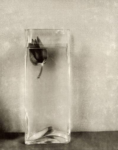 Robert Maxwell, 'Floating Tulip', 1994