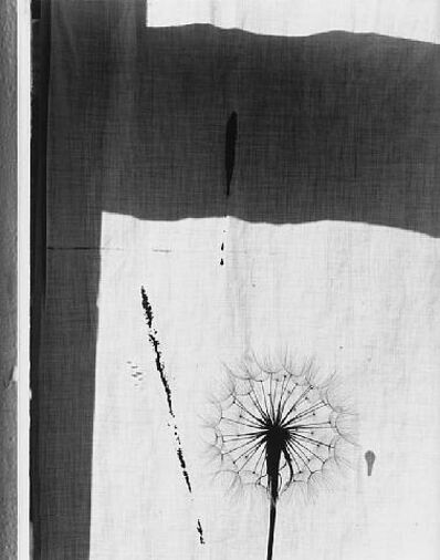 Paul Caponigro, 'Thistle and Window', 1958