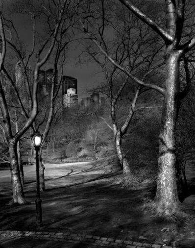 Michael Massaia, 'Deep in A Dream - Central Park - 4am London Plane Trees', 2009