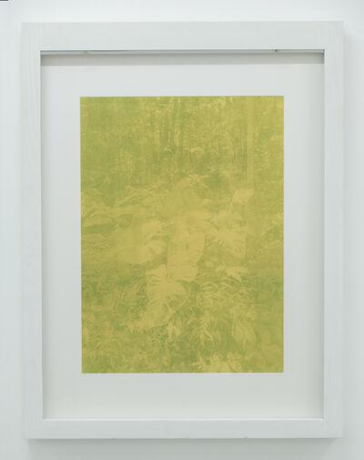 Yann Gross, 'Allpahuayo Mishana', 2019