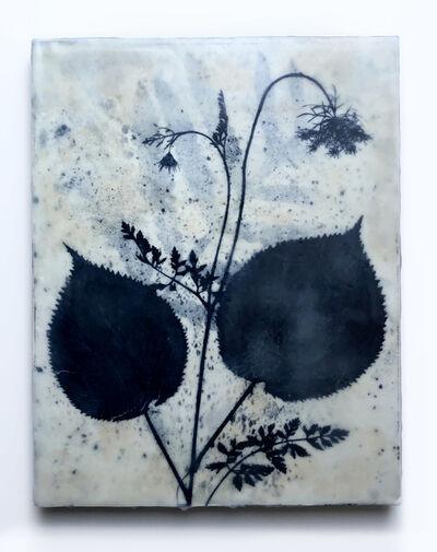 Julia Whitney Barnes, 'Botany of Poughkeepsie/Lithograph Cyan 2', 2019