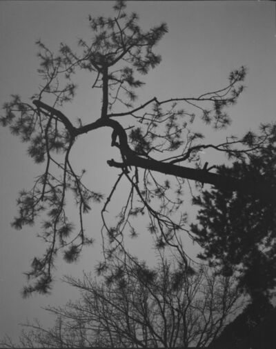 Huang Rui 黄锐, 'Water in Pine 8', 2000