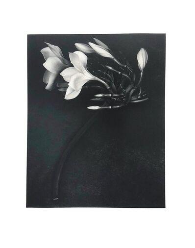 Albert Watson, 'Orchid', 1988