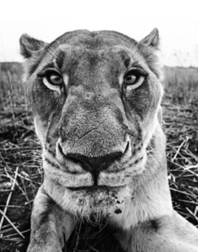 David Yarrow, 'The Hunger Games ', 2016