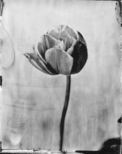 "Emilija Petrauskiene, 'Tulip ""Allegretto""', 2017"