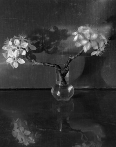 James Pitts, 'Two Pear Branchs Clear Tiny Vase Reflections Shadows Fabric Background', 2020
