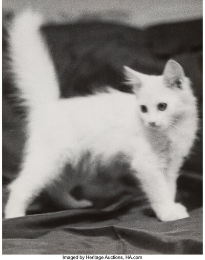 Morris H. Jaffe, 'Three Photographs of Cats'