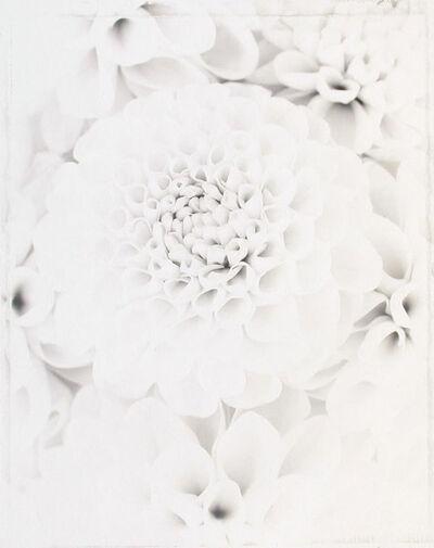 Ron van Dongen, 'Dahlia 'Everest' (WOW 036)', 1999