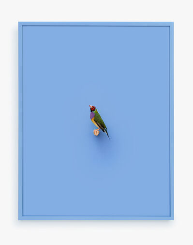 Daniel Handal, 'Gouldian Finch (Ray of Power)', 2016