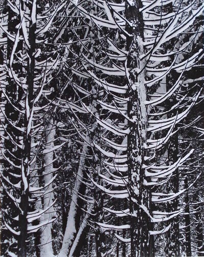 Ansel Adams, 'Forest Detail, Winter', 1949