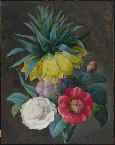 Pierre Joseph Redouté, 'Four Peonies and a Crown Imperial'