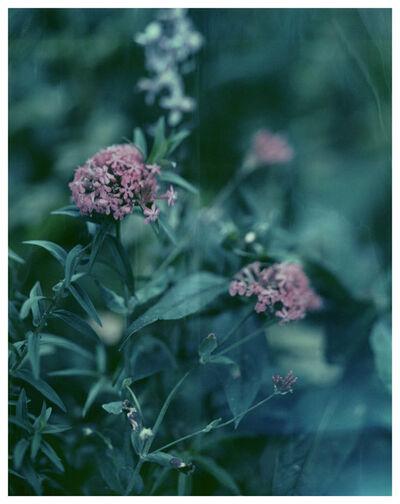 Darren Almond, 'Civil Dawn@Giverny 13', 2011