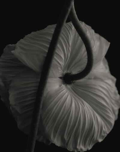 Yumiko Izu, 'Secret Garden Noir 6', 2004