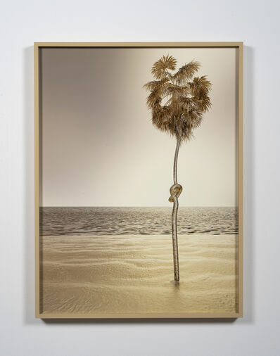Joe Sola, 'Knotted Palm', 2020