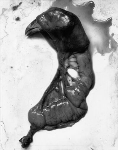 Frederick Sommer, 'Chicken', 1939