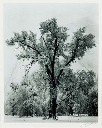Ansel Adams, 'Oak Tree, Snowstorm, Yosemite National Park, California', 1948