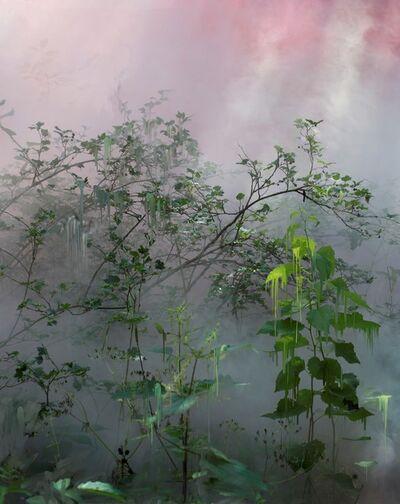 Sandra Kantanen, 'Forest 21 ', 2021