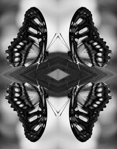 Indira Cesarine, 'Papiliones No 8 ', 2016