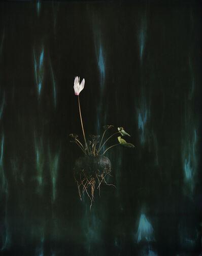 Ori Gersht, 'Black Cyclamen P04', 2018