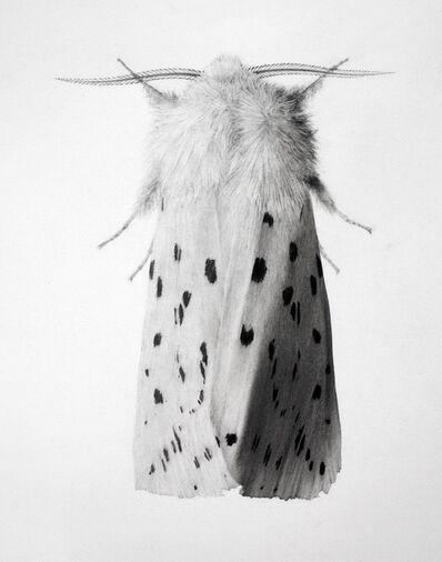 Jonathan Delafield Cook, 'Ermine Moth I', 2018-2019