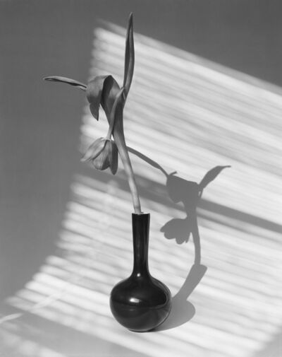 James Pitts, 'Tulip Facing Down Black Vase Shadows Curved Background', 2020