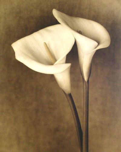 "Jan Gauthier, '""From Robin's Garden"" (Calla Lily #4)', 2004"
