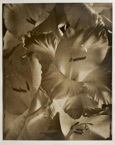 Tom Baril, 'Gladiola', 1998