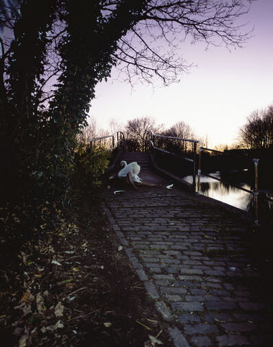 Tom Hunter, 'Up Before the Beak (Angry Swan guards Bridge after Crash), from the series Headlines', 2003