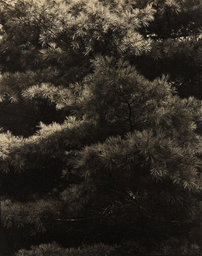 Paul Strand, 'Connecticut Pines, Twin Lakes, CT', ca. 1921