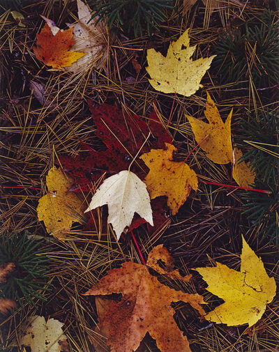 Eliot Porter, 'Maple Leaves and Pine Needles, Tamworth, New Hampshire, October 3', 1956
