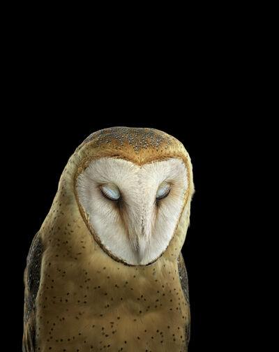 Brad Wilson, 'Barn Owl #3, St. Louis MO', 2012