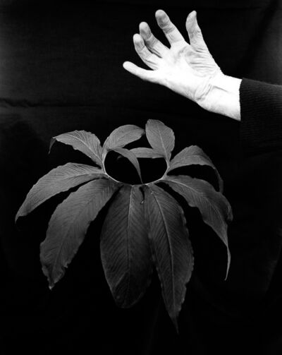 Imogen Cunningham, 'Hand and Leaf of Black Lily', 1981