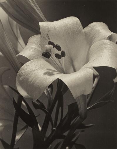 Alma Lavenson, 'Easter Lily', 1932
