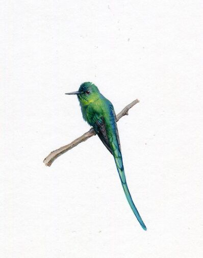 Dina Brodsky, 'Long Tailed Sylph', 2019