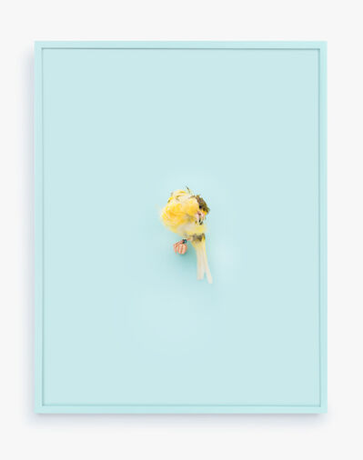 Daniel Handal, 'Yellow Parisian Frilled Canary (Baby Blue)', 2017