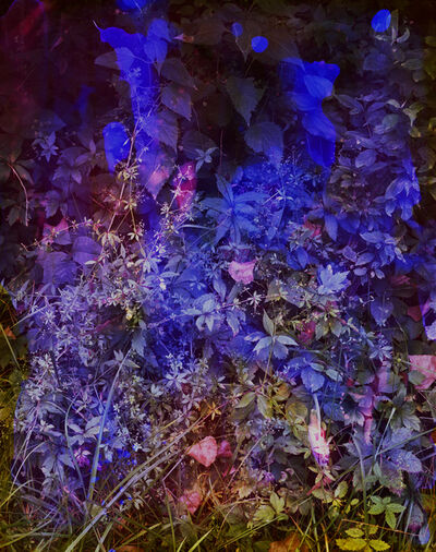 Tealia Ellis Ritter, 'Reenactment 285 (Violet)', 2016
