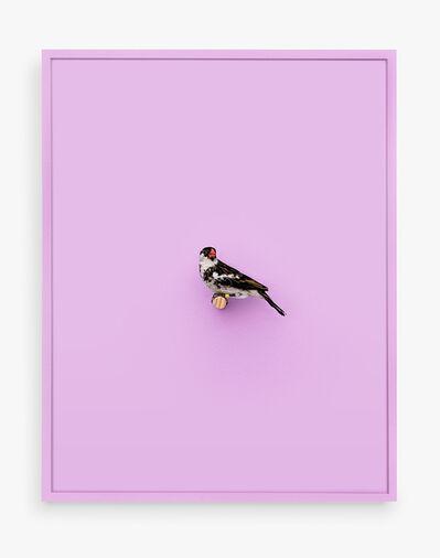 Daniel Handal, 'Whydah Finch (Ray of Peace)', 2017