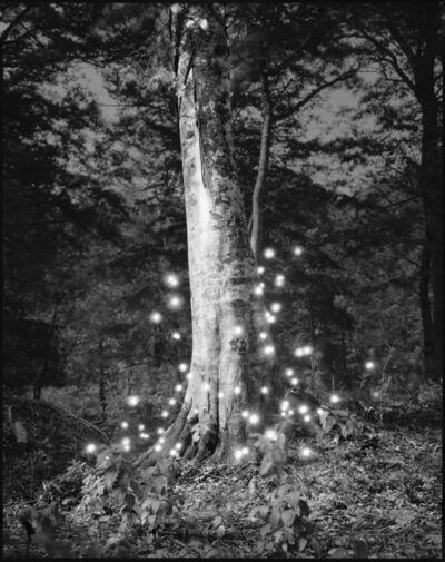 Tokihiro Sato, 'Photo Respiration Trees Shirakami #4', 2008