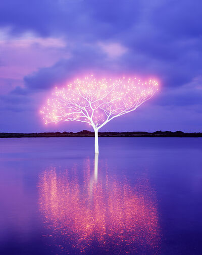 Lee Jeonglok, 'Tree of Life in Island 5-4-8', 2013