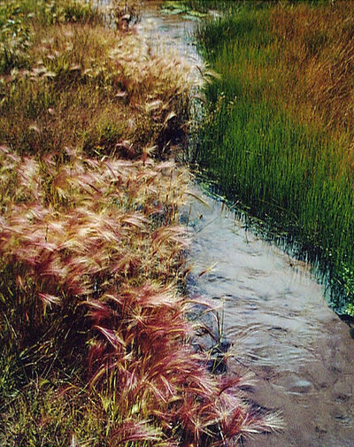 Eliot Porter, 'Foxtail Grass, Great Sand Dunes, Colorado', 1976