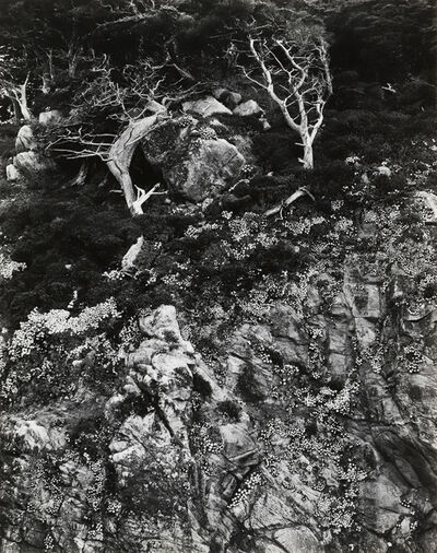 Edward Weston, 'Point Lobos, 1940', 1940
